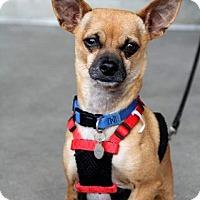 Adopt A Pet :: Cisco - Vista, CA