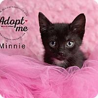 Adopt A Pet :: Minnie - Friendswood, TX