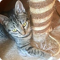 Adopt A Pet :: Marlo - LaGrange Park, IL