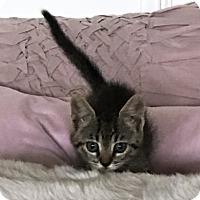 Adopt A Pet :: Cookie - Orange, CA