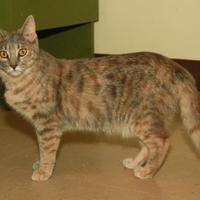 Adopt A Pet :: Shirley - Greensboro, GA