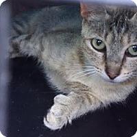 Adopt A Pet :: Joyela - LaJolla, CA