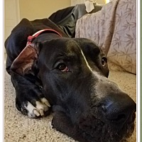 Adopt A Pet :: Severus - York, PA
