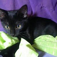 Adopt A Pet :: Mimi - Spring, TX