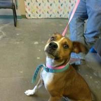 Adopt A Pet :: JUNO - Los Lunas, NM
