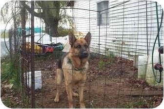 German Shepherd Dog Dog for adoption in Chase, Michigan - Thor