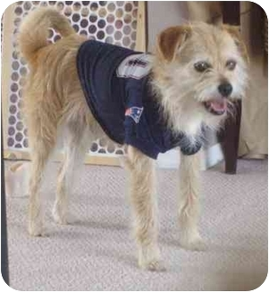 Terrier (Unknown Type, Small) Mix Dog for adoption in Calgary, Alberta - Linus