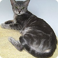 Adopt A Pet :: Buffy - Delray Beach, FL