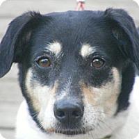 Adopt A Pet :: Haven - Toledo, OH
