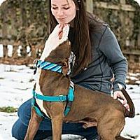 Adopt A Pet :: Rudy - Clarksburg, MD