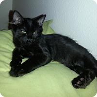 Adopt A Pet :: Onion - Gilbert, AZ