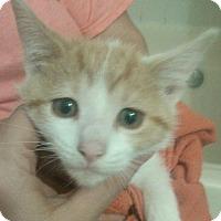 Adopt A Pet :: Crush - Lawrenceville, GA