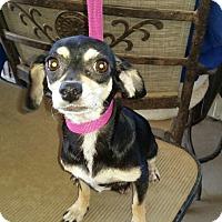 Adopt A Pet :: Ashley - Pomerene, AZ