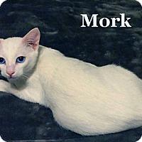 Adopt A Pet :: Mork - Bentonville, AR