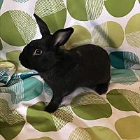 Adopt A Pet :: Rizzo - Manhattan, KS