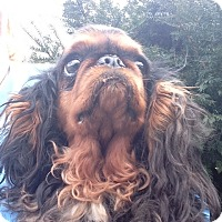 Adopt A Pet :: Eunice - Cumberland, MD