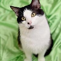 Adopt A Pet :: Cedric Diggory - Chattanooga, TN