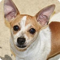 Adopt A Pet :: Flurry - Hooksett, NH