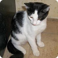 Adopt A Pet :: Rascal - Lacon, IL