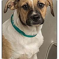 Adopt A Pet :: Doc - Owensboro, KY