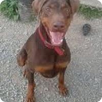 Adopt A Pet :: Nash - Pending - New Richmond, OH