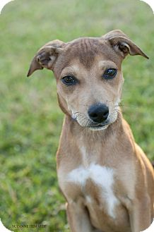 Terrier (Unknown Type, Small) Mix Dog for adoption in Allentown, Pennsylvania - Yumi