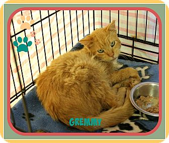 Domestic Mediumhair Cat for adoption in New Richmond,, Wisconsin - Gremmy