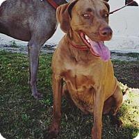 Adopt A Pet :: Kansas - Sun Valley, CA
