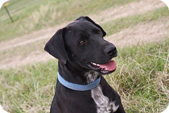 Labrador Retriever Mix Dog for adoption in Columbus, Ohio - JACK
