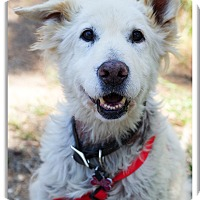 Adopt A Pet :: Buttermilk needs love - Sacramento, CA