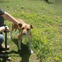 Adopt A Pet :: BAMBI - KELLYVILLE, OK