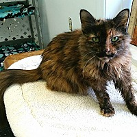 Adopt A Pet :: Reya - Austintown, OH