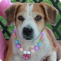 Adopt A Pet :: Leigh-PENDING - Garfield Heights, OH