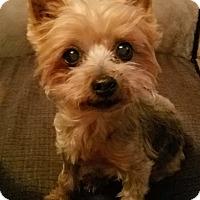 Adopt A Pet :: Kymba - Chicago, IL