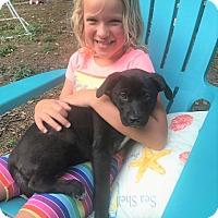 Adopt A Pet :: LENA - Knoxville, TN