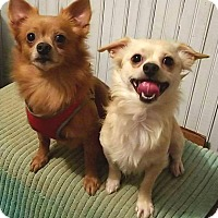Adopt A Pet :: Jake and Louey - Andalusia, PA