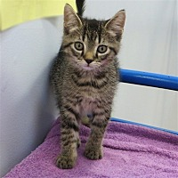 Adopt A Pet :: Sparkplug - Indiana, PA