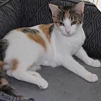 Adopt A Pet :: J17 Cassie - Northville, MI