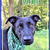 Adopt A Pet :: Danu - Batesville, AR