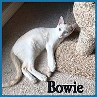 Adopt A Pet :: Bowie - Madisonville, LA