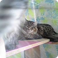 Adopt A Pet :: Ulysses - Tarboro, NC