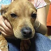 Adopt A Pet :: Cameron - South Jersey, NJ