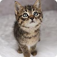 Adopt A Pet :: Goofy - Eagan, MN