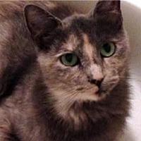Adopt A Pet :: Bella - Tustin, CA