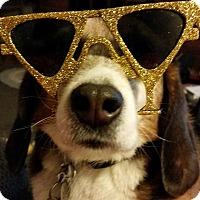 Adopt A Pet :: Puffer - Yardley, PA