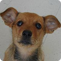 Adopt A Pet :: Flynn - Erwin, TN