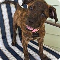 Adopt A Pet :: Ginny - Gainesville, FL