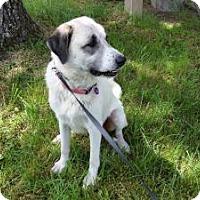 Adopt A Pet :: Gabi - Crocker, MO