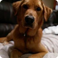 Adopt A Pet :: Proto - Murrells Inlet, SC