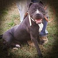 Adopt A Pet :: Revere - Baxter, TN